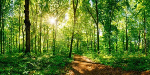 Bild: Wald (Eilenriede Hannover)