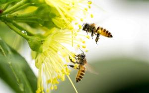 Sommerliches Bild: Biene auf Blume